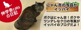 伸学舎catsの日記